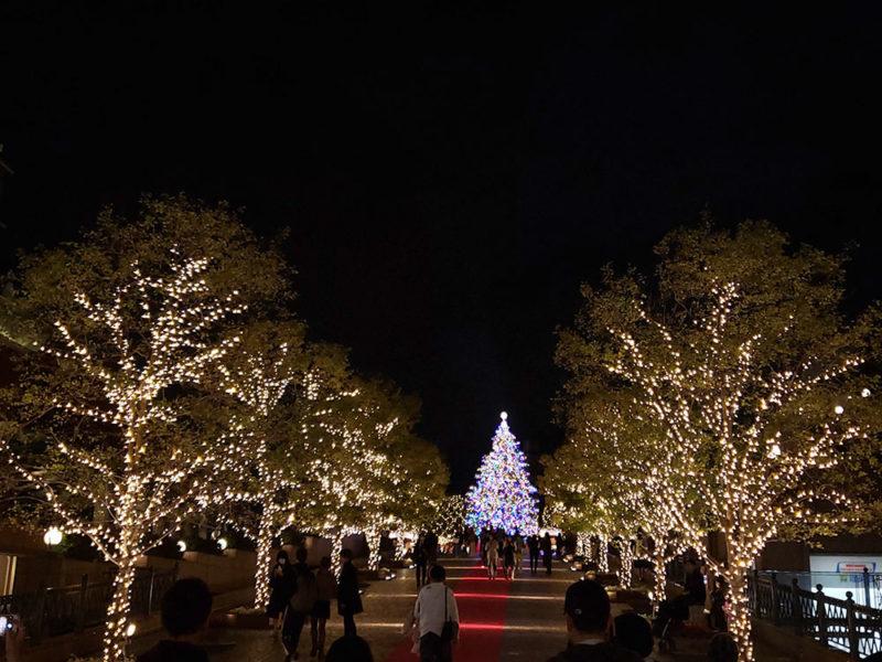 シャンデリアから見たクリスマスツリー